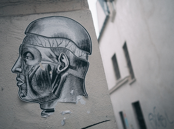 Paris street art depicting antique medical illustration of the facial muscles and skull